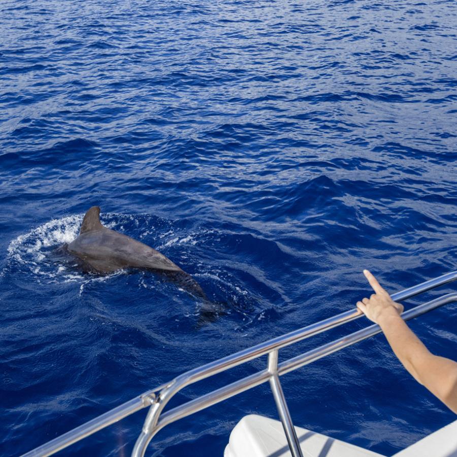 Avistamiento de ballenas en Tenerife